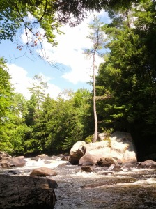 A tree flourishing on a rock in the Adirondacks