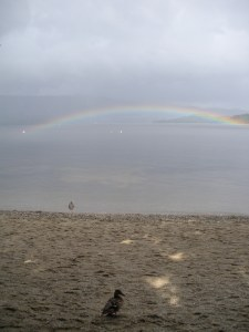 A duck and a rainbow at Loch Lomond.